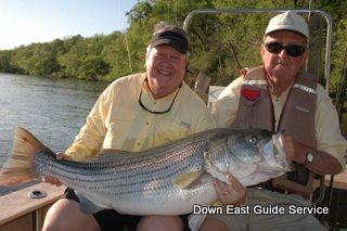 striped bass in roanoke river